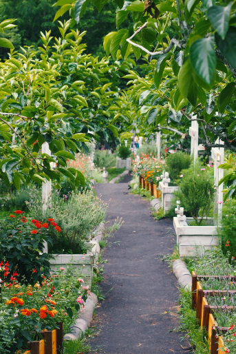 Path in a vegetable garden